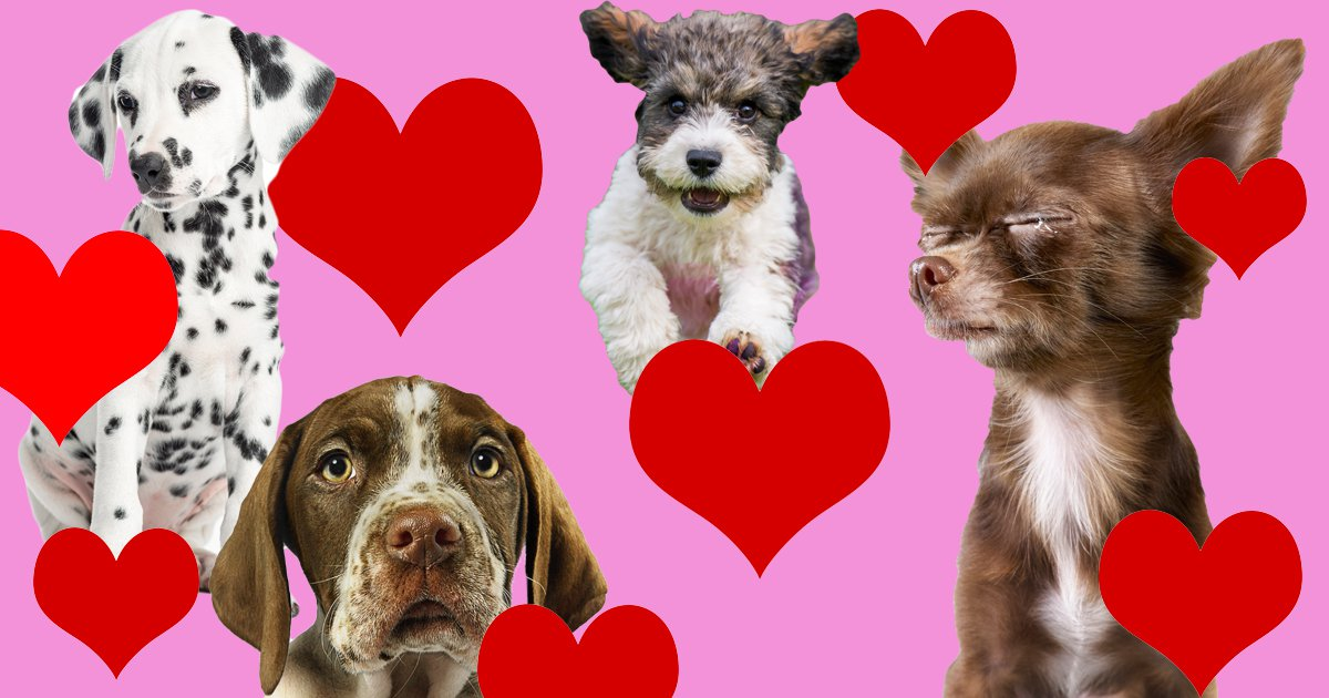 16 signs you love your dog more than your friends (and maybe family?)