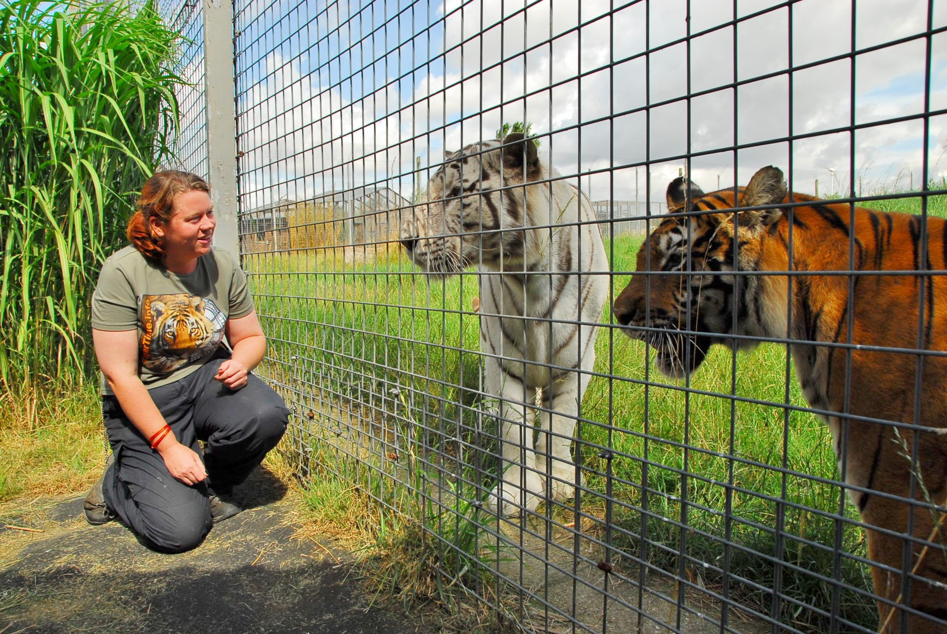 Campaign launched to stop Hamerton Zoo from putting down tiger that killed keeper