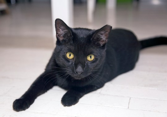 Why black cats are better than any other kind | Metro News