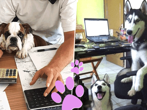 Why every day should be Bring Your Dog To Work Day