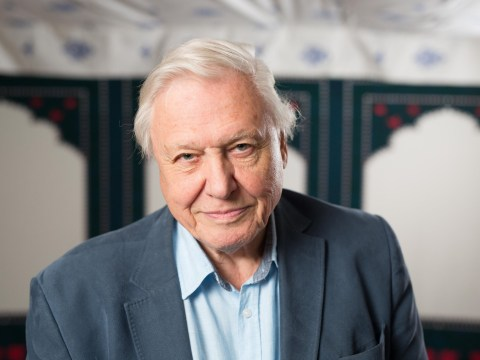 Sir David Attenborough regrets spending so much time away from his kids while making documentaries