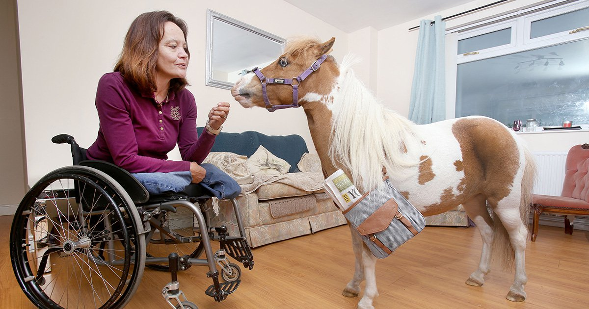 Miniature guide horses could soon be a thing in the UK