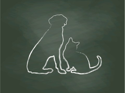 'My life is richer for having had him in it': Why it is OK and natural to grieve for your pet