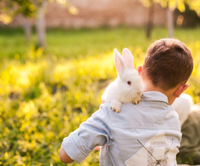 a9e318f61 17 things no one tells you before you get a rabbit   Metro News