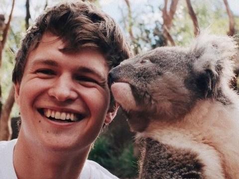 Ansel Elgort risks koala chlamydia in cosy animal snap