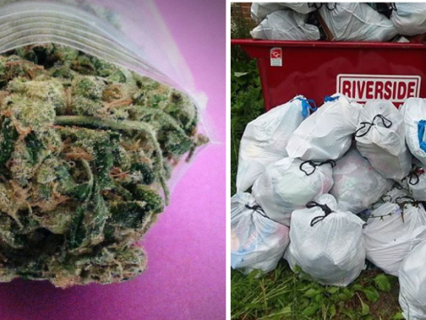 Dispensary gives away free weed to anyone who cleans up rubbish around town