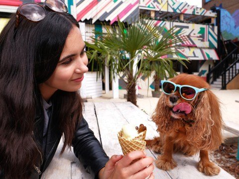 Dogs can get free ice cream at a London food festival this weekend