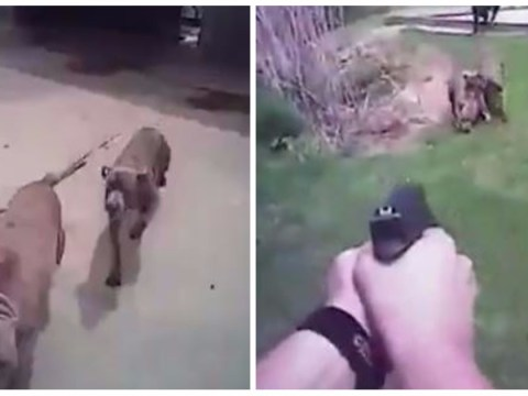 Bodycam catches moment cop shoots dog dead after coaxing it over
