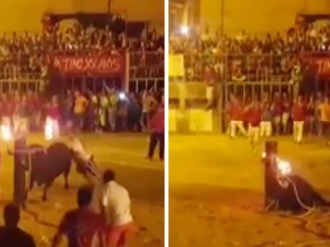 Terrified bull kills itself on wooden post after its horns were set on fire