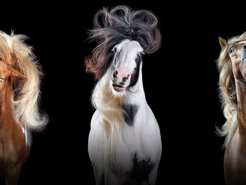 The horses in this photo series have better hair than us