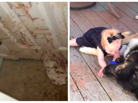 Horrific videos show bloody aftermath of dog attack on home intruder
