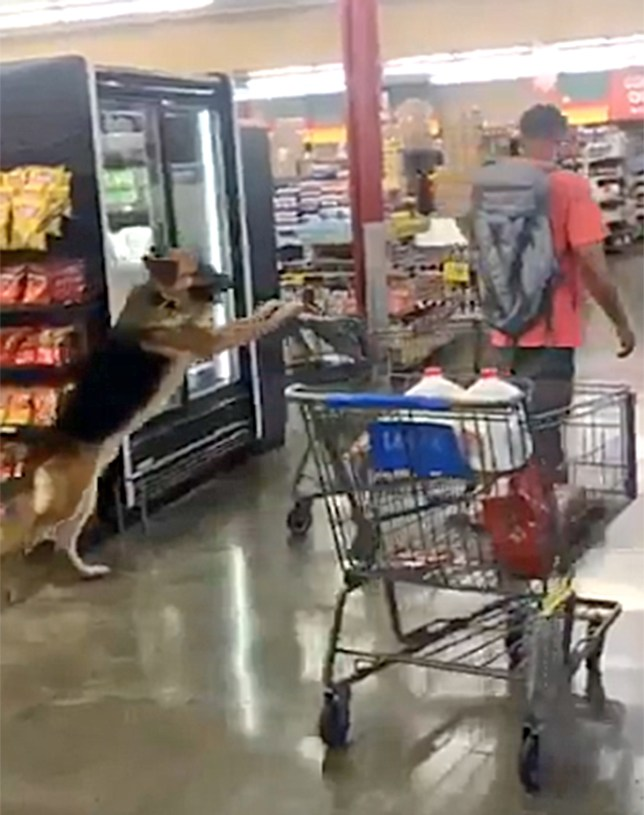 Dog pushing trolley down shopping aisle has freaked out the internet