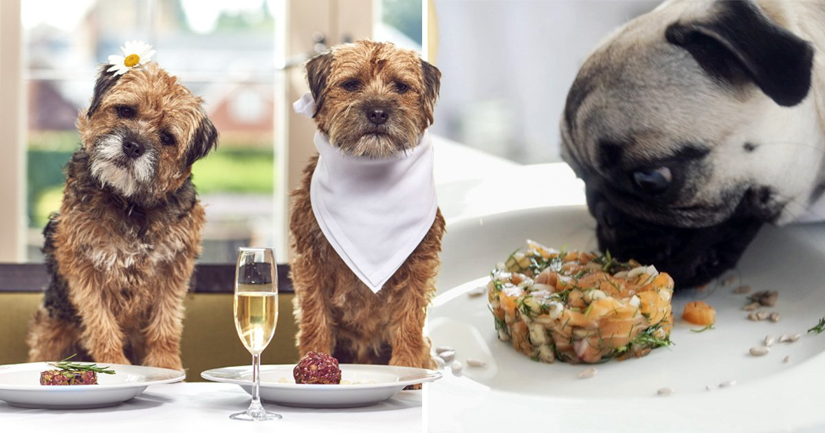 This dog-friendly hotel is serving up posh nosh for pooches