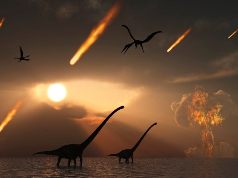 Dinosaurs weren't the only creatures wiped out in a cataclysmic asteroid strike, scientists discover