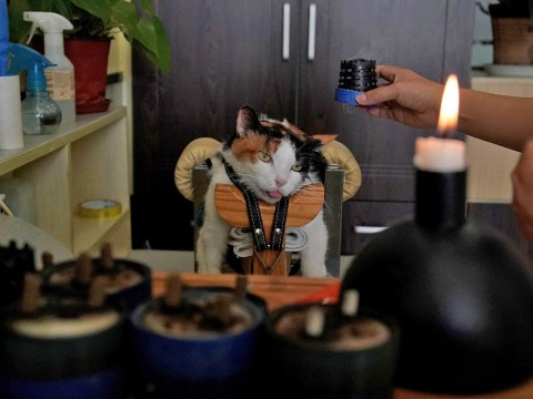 Pet owners in China are giving their furry friends acupuncture