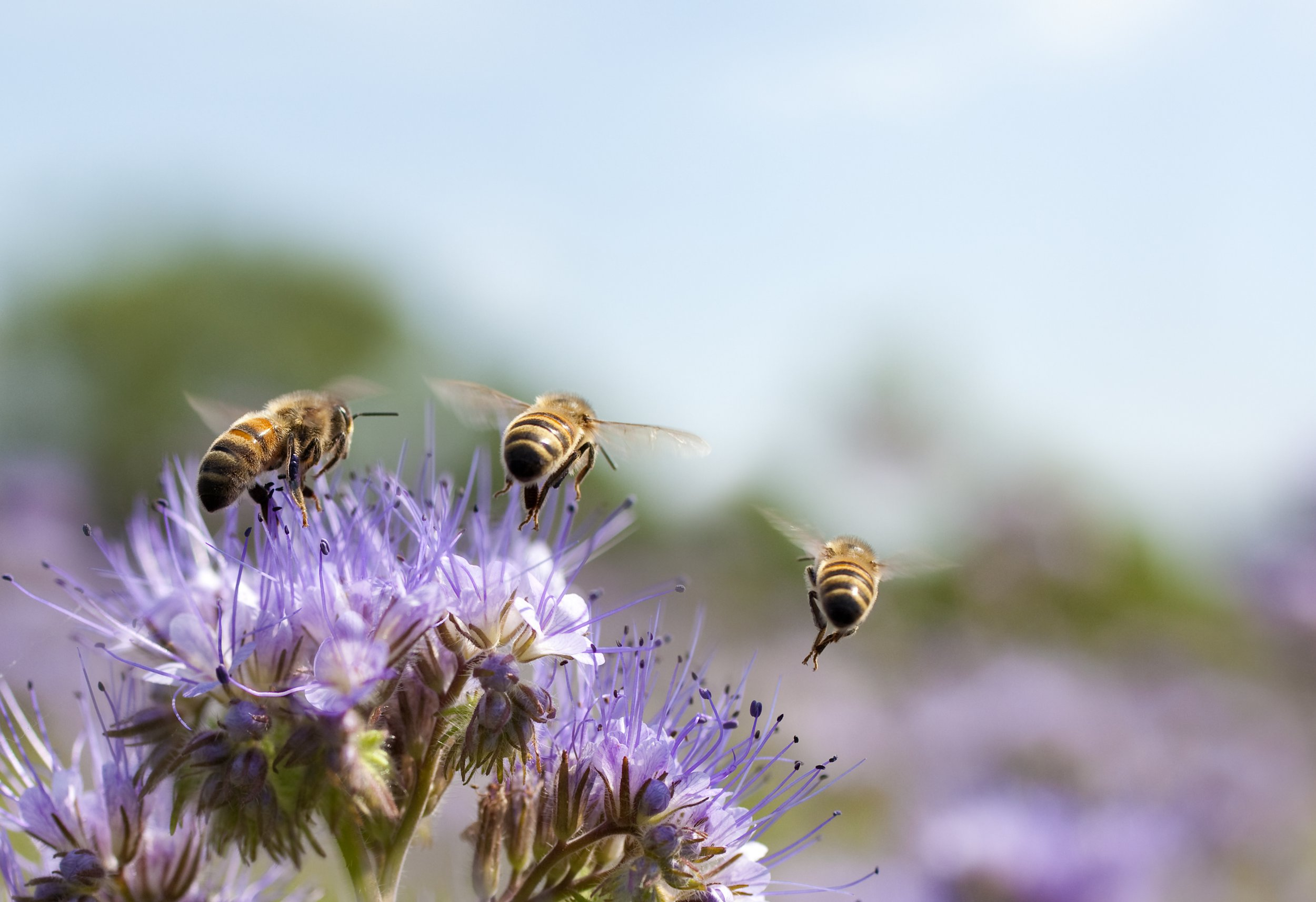 Washout August spells trouble for British bees