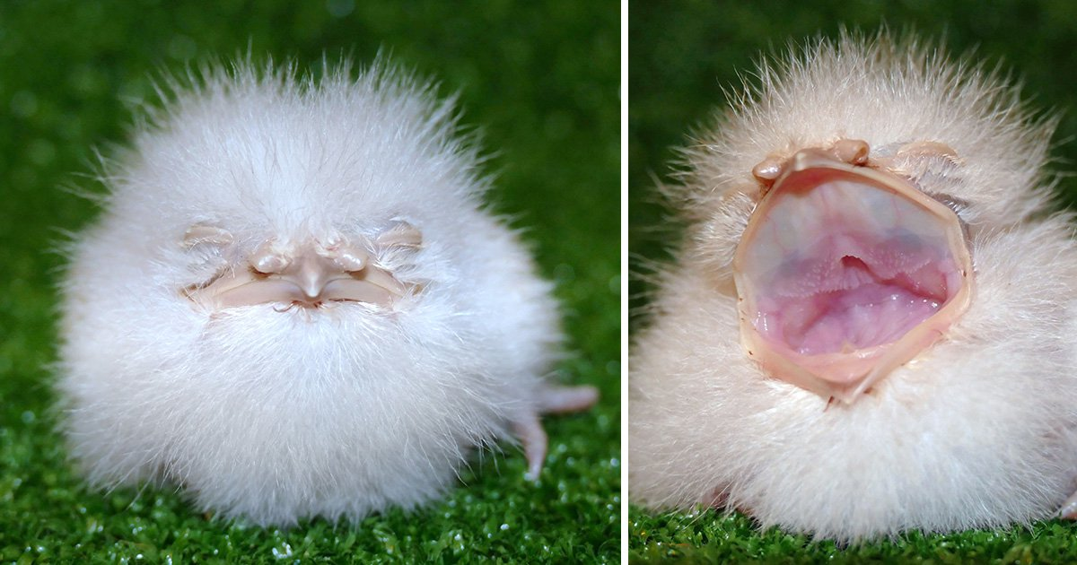 We can't work out if this 'real life Furby' is adorable or terrifying