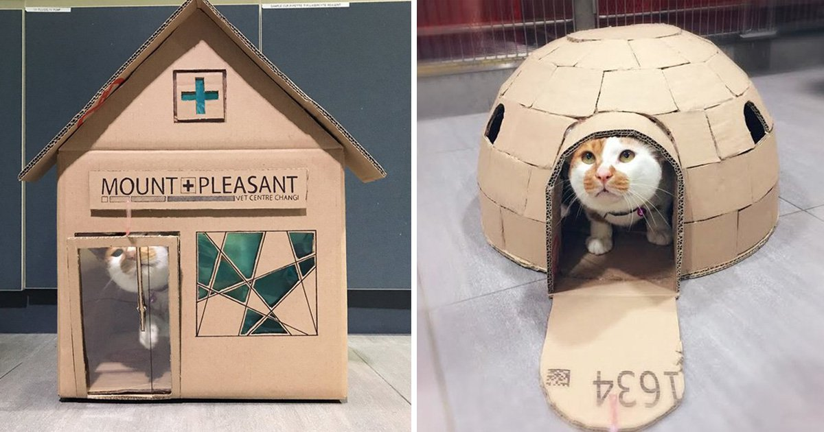 Vet's office crafts incredible cardboard houses for their resident cat