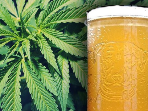 You can now get weed-infused beer on tap