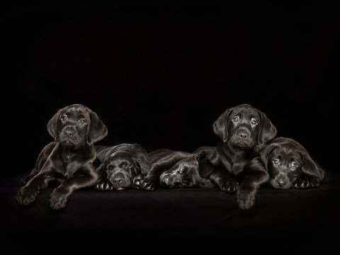This photographer's gorgeous photos of black dogs have a serious message behind them