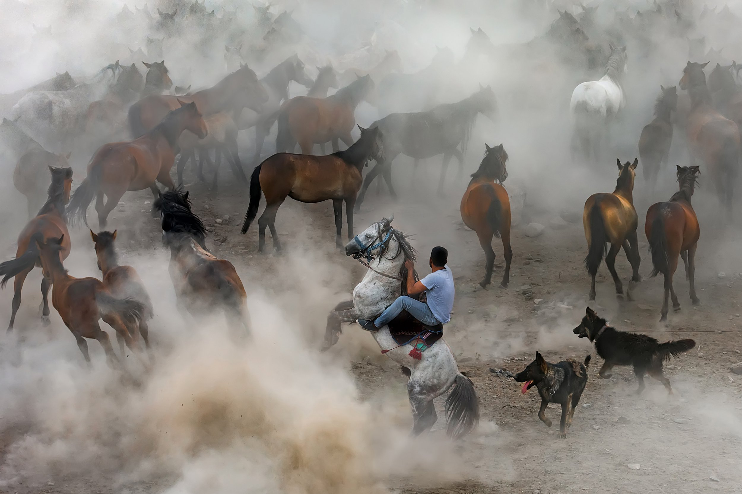 You have to see this year's stunning Sony World Photography Award submissions