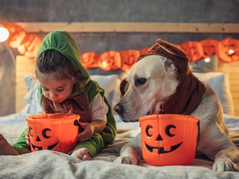 Vegan Halloween – 4 ways to enjoy the celebration with your family