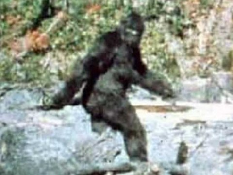 Bigfoot has boobs and wants to be filmed, says witness who caught her on camera