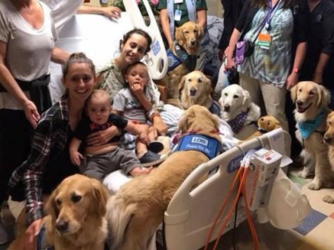 Meet the comfort dogs helping people get through the Las Vegas massacre
