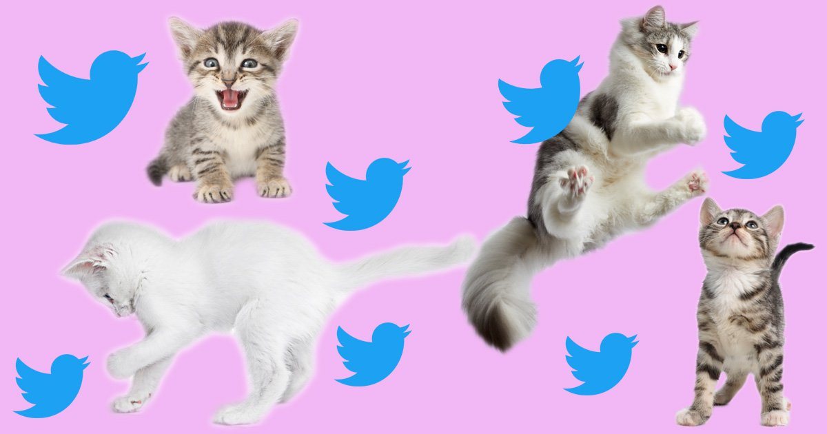 9 tweets about kittens that are better than eating raw cookie dough