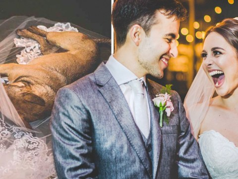 Couple's reaction to a dog who crashed their wedding is so, so great