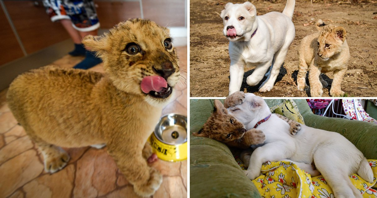 Elza the puppy has a lion cub as her best friend