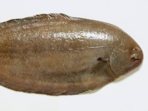 Man nearly dies after whole Dover sole jumps down his throat
