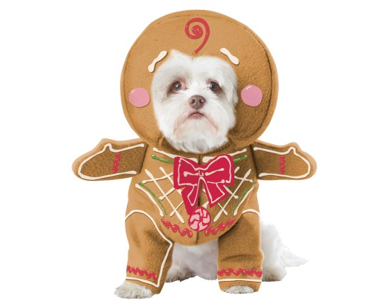 Christmas Pudding Outfit.12 Christmas Outfit Ideas For Dogs Metro News