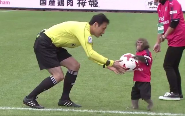 A monkey presents the ball to a referee prior to a match in Japan's J-League