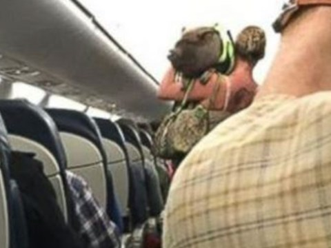 Woman kicked off flight after emotional support pig became disruptive