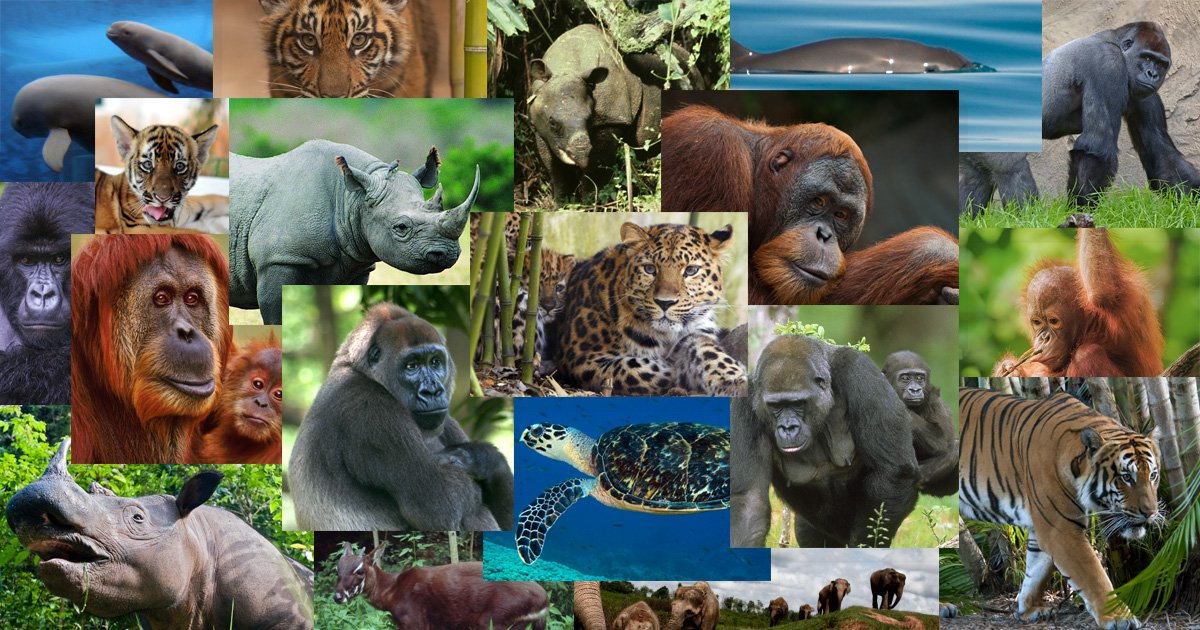 Pictures of all endangered animals