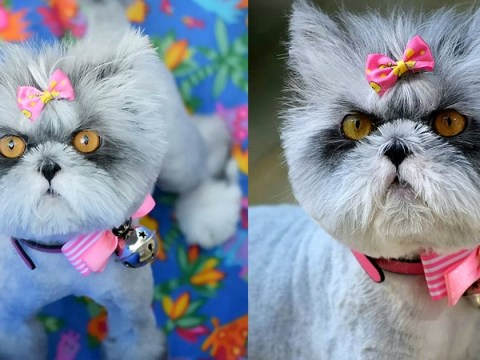 Hairy cat is constantly being mistaken for a dog due to its rare condition