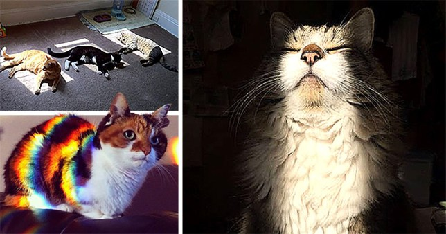 Take five minutes out of your day to smile at these cats enjoying the sunlight
