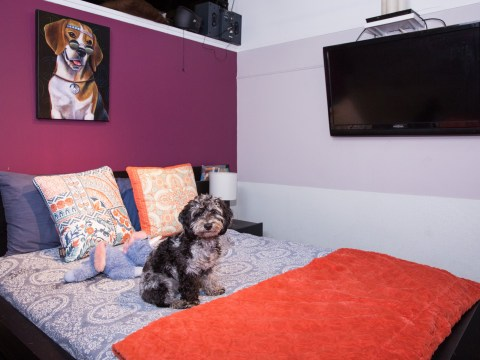 Inside New York's most luxurious hotel for dogs