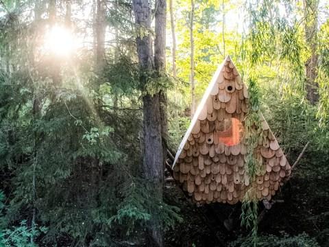 Amazing human-sized birdhouse let you snooze among the treetops