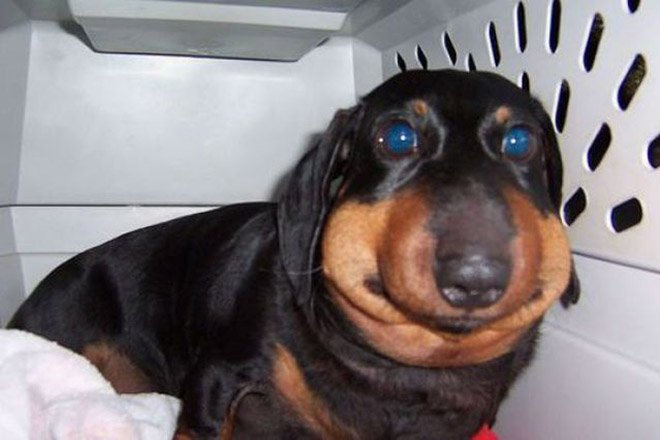 Photos of dogs stung by bees