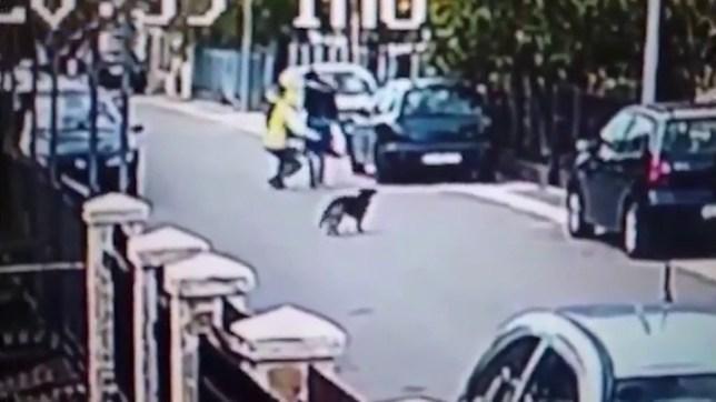 Dog stops street robbery