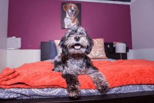 The suites in New York's most exclusive dog hotel are nicer than your bedroom