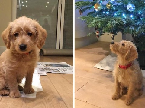 Very brave puppy survives three days lost in freezing park