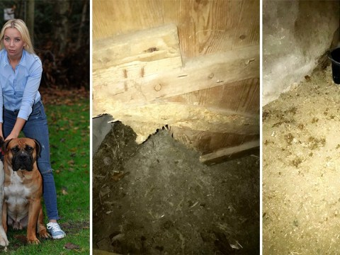 Owner discovers 'horrifying dog dungeon' while rescuing her two stolen pets