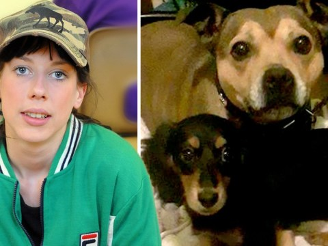 Woman's anger at Staffie being barred from sausage dog party