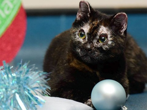 A cat who was left severely burnt in a garden fire has found a new home