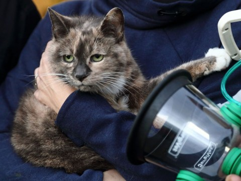 Fire service to get special oxygen masks for pets