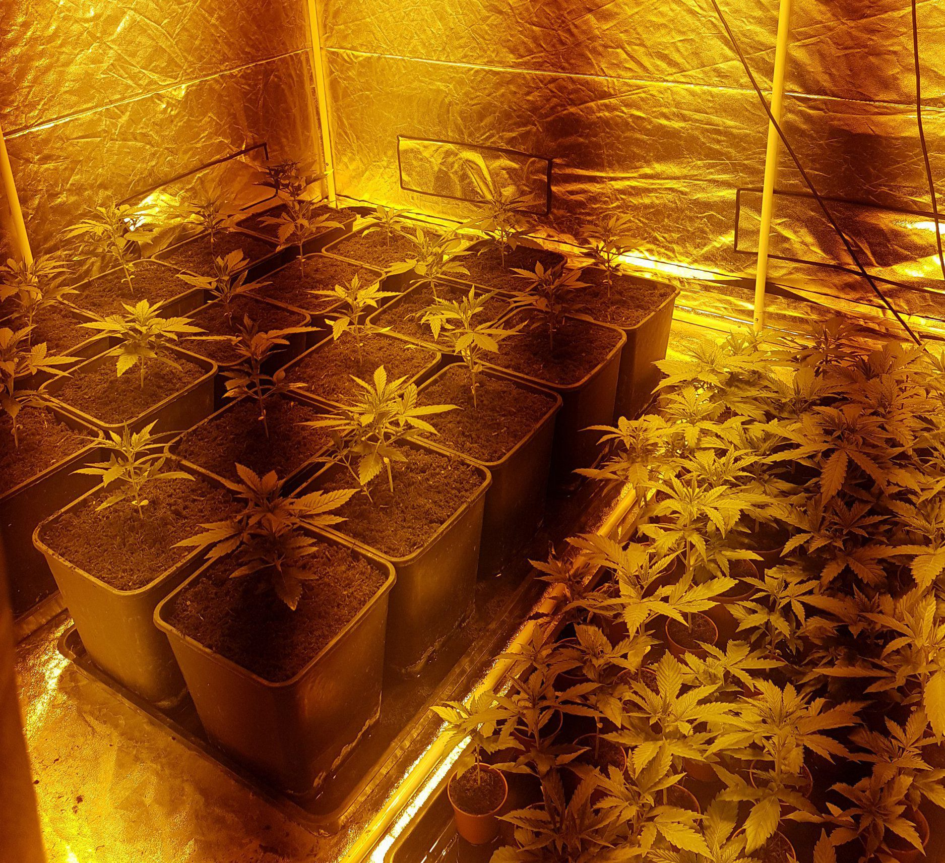 secret cannabis farm found when workers went to check fuse box Electrical Box