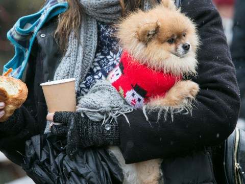 Hundreds of dogs teamed up in the cold to beat a Christmas jumper record